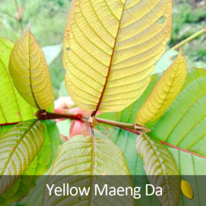 yellow_md